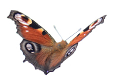 Photo Papillon Agimago